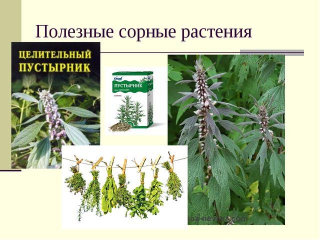Полезные сорные растения