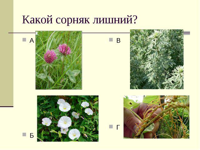 Какой сорняк лишний? А Б В Г