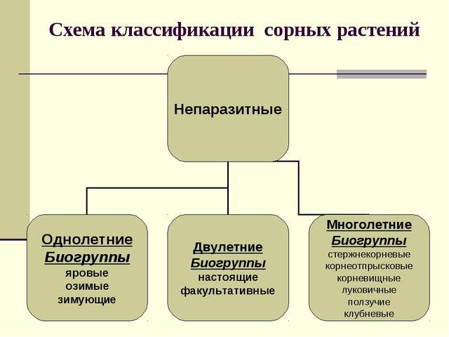 Схема классификации сорных растений