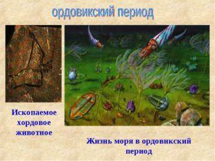 Жизнь моря в ордовикский период Ископаемое хордовое животное