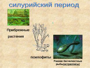 Ранние бесчелюстные рыбы(астрасписы) Прибрежные растения псилофиты