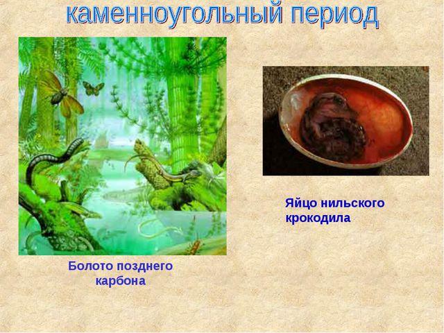 Болото позднего карбона Яйцо нильского крокодила