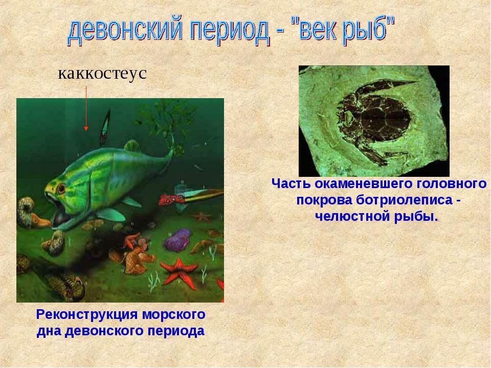Реконструкция морского дна девонского периода Часть окаменевшего головного п...