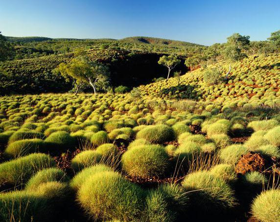 австралия природа