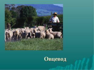 Овцевод