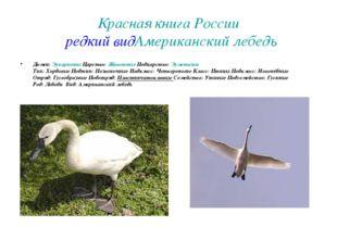 Красная книга России редкий вид Американский лебедь Домен:Эукариоты Царство: