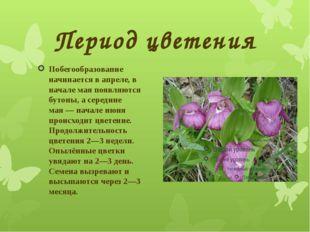 Период цветения Побегообразование начинается в апреле, в начале мая появляютс