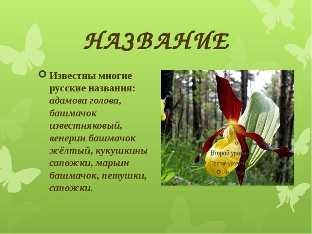 НАЗВАНИЕ Известны многие русские названия: адамова голова, башмачок известняк...