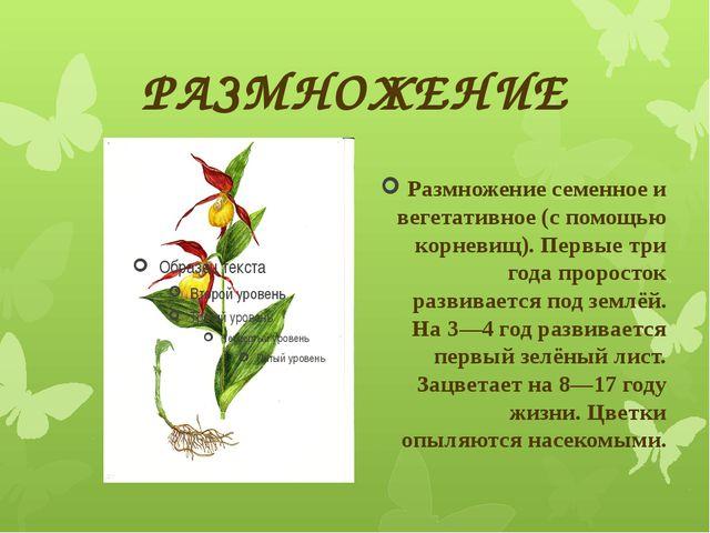 РАЗМНОЖЕНИЕ Размножение семенное и вегетативное (с помощью корневищ). Первые...
