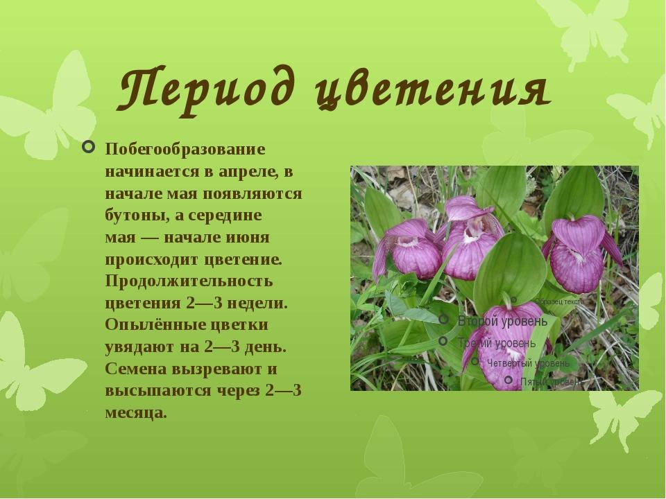 Период цветения Побегообразование начинается в апреле, в начале мая появляютс...