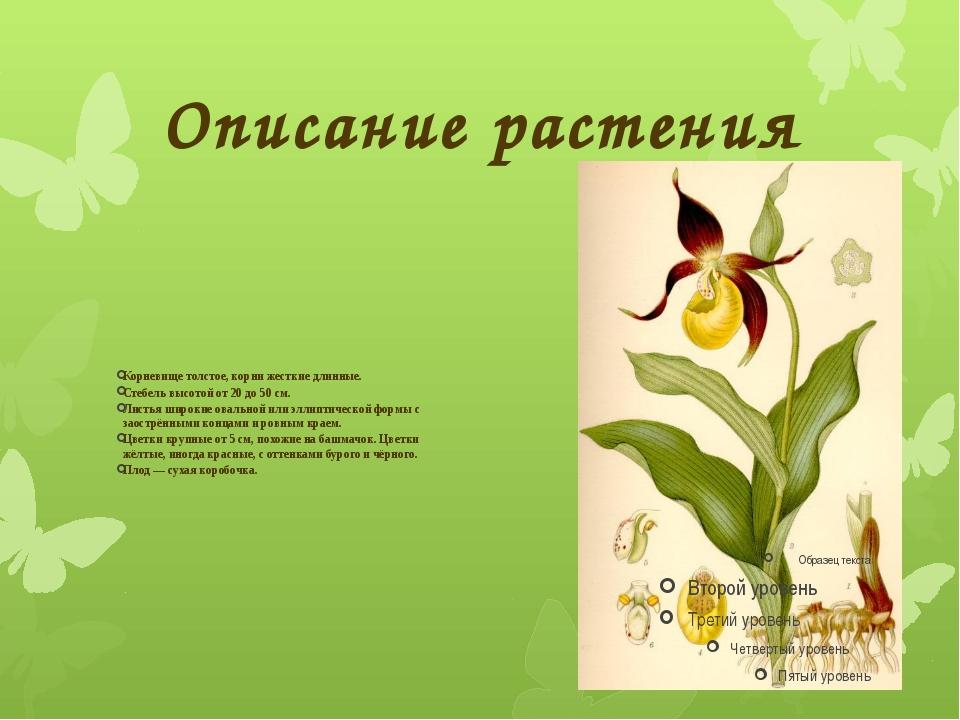 Описание растения Корневище толстое, корни жесткие длинные. Стебель высотой о...
