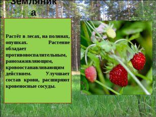 Земляника . Растёт в лесах, на полянах, опушках. Растение обладает противовос