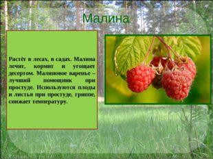 Малина Растёт в лесах, в садах. Малина лечит, кормит и угощает десертом. Мали