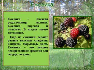 Ежевика Ежевика – близкая родственница малины. Ежевика вкусная и полезная. В