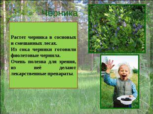 Черника Растет черника в сосновых и смешанных лесах. Из сока черники готовили