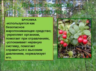 Лучшее лакомство хвойного леса БРУСНИКА -используется как безопасное жаропони