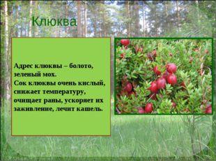Клюква Адрес клюквы – болото, зеленый мох. Сок клюквы очень кислый, снижает т