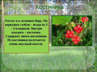 Костяника . Растет я в сосновом бору. На верхушке стебля – ягода из 3 – 4 пло