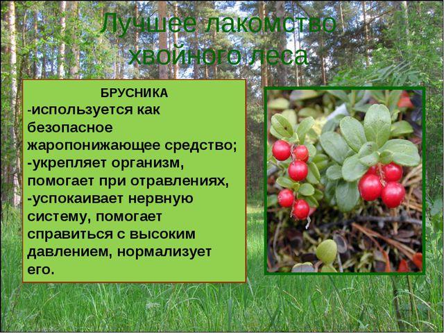Лучшее лакомство хвойного леса БРУСНИКА -используется как безопасное жаропони...