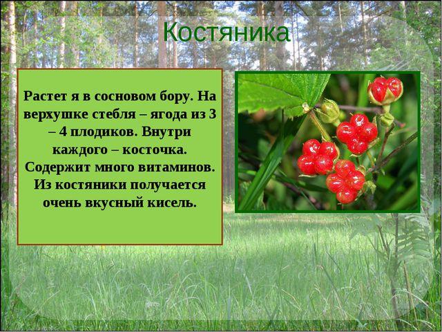 Костяника . Растет я в сосновом бору. На верхушке стебля – ягода из 3 – 4 пло...