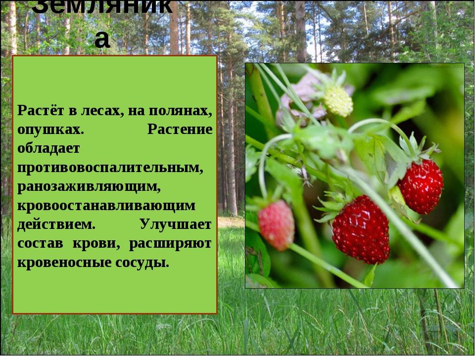 Земляника . Растёт в лесах, на полянах, опушках. Растение обладает противовос...