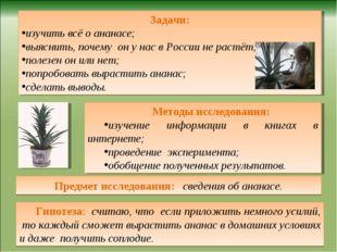 Предмет исследования: сведения об ананасе. Гипотеза: считаю, что если приложи