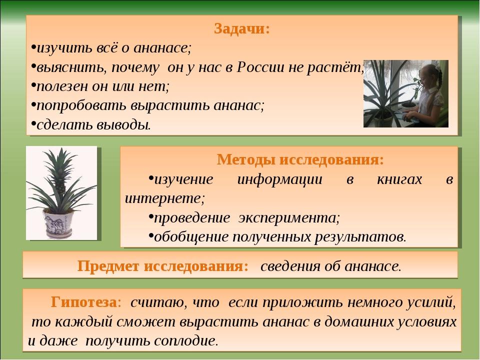 Предмет исследования: сведения об ананасе. Гипотеза: считаю, что если приложи...