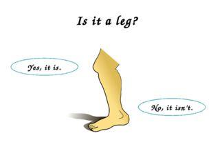 Is it a leg? Yes, it is. No, it isn't.