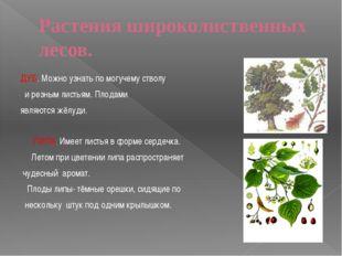 Смешанный ЛЕС Наряду с хвойными деревьями растут лиственные. Зима в таком лес