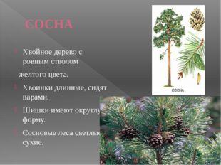 Лиственница Единственное из хвойных деревьев, которое на зиму сбрасывает игол