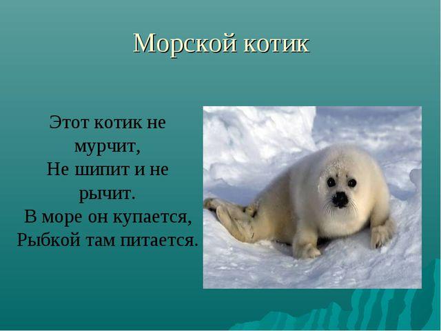 Морской котик Этот котик не мурчит, Не шипит и не рычит. В море он купается,...