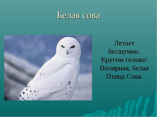 Белая сова Летает бесшумно. Кругом голова! Полярная, белая Птица Сова.