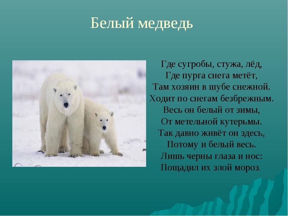 Белый медведь Где сугробы, стужа, лёд, Где пурга снега метёт, Там хозяин в шу...