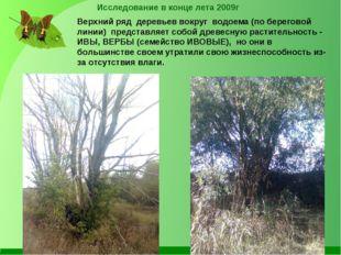 Исследование в конце лета 2009г Верхний ряд деревьев вокруг водоема (по берег