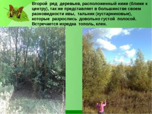 Второй ряд деревьев, расположенный ниже (ближе к центру), так же представляет