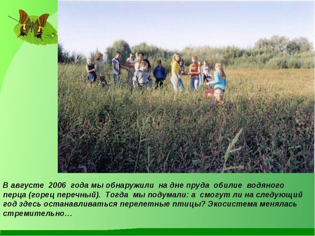В августе 2006 года мы обнаружили на дне пруда обилие водяного перца (горец п...