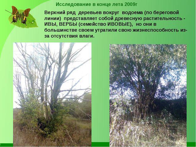 Исследование в конце лета 2009г Верхний ряд деревьев вокруг водоема (по берег...