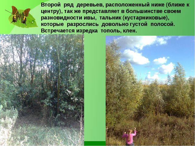 Второй ряд деревьев, расположенный ниже (ближе к центру), так же представляет...