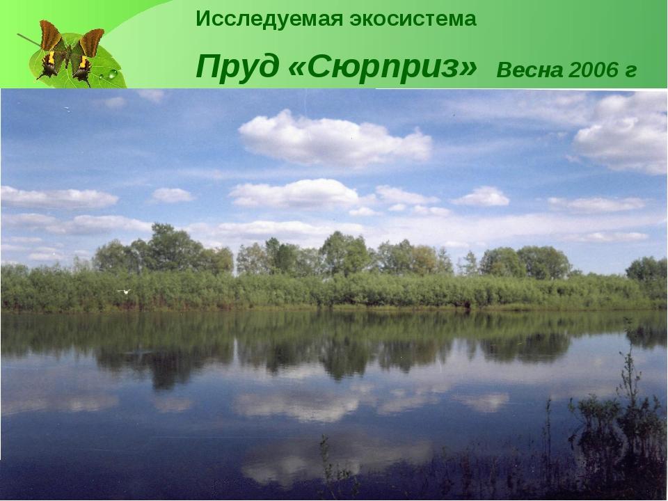 Исследуемая экосистема Пруд «Сюрприз» Весна 2006 г