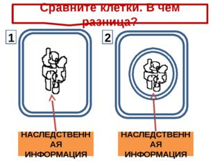 НАСЛЕДСТВЕННАЯ ИНФОРМАЦИЯ НАСЛЕДСТВЕННАЯ ИНФОРМАЦИЯ Сравните клетки. В чем р