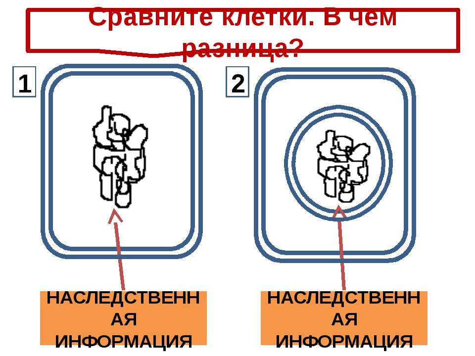 НАСЛЕДСТВЕННАЯ ИНФОРМАЦИЯ НАСЛЕДСТВЕННАЯ ИНФОРМАЦИЯ Сравните клетки. В чем р...