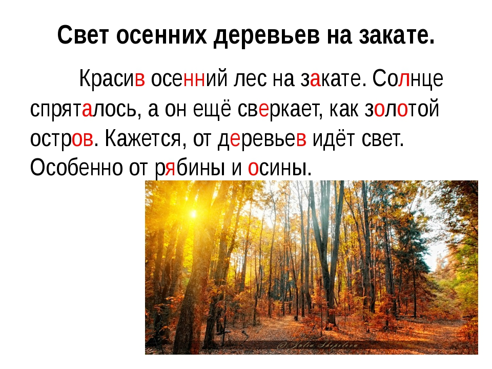 Свет осенних деревьев на закате. Красив осенний лес на закате. Солнце спрят...