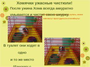 Запомните, хомячков нельзя купать, иначе они могут простудиться и погибнуть!