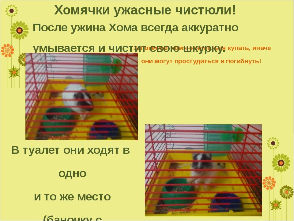 Запомните, хомячков нельзя купать, иначе они могут простудиться и погибнуть!...