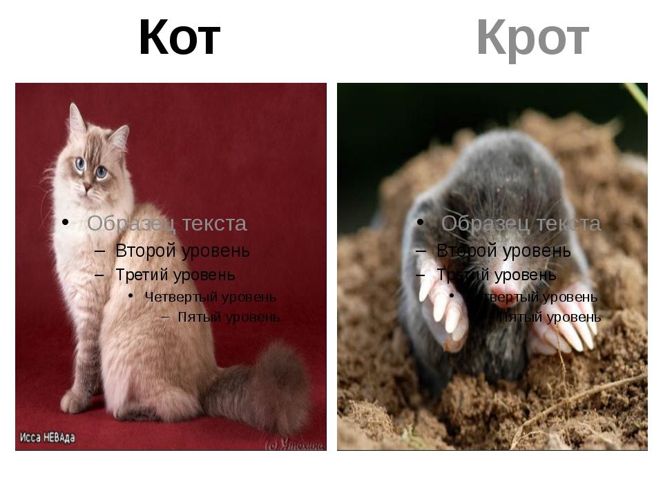 Кот Крот