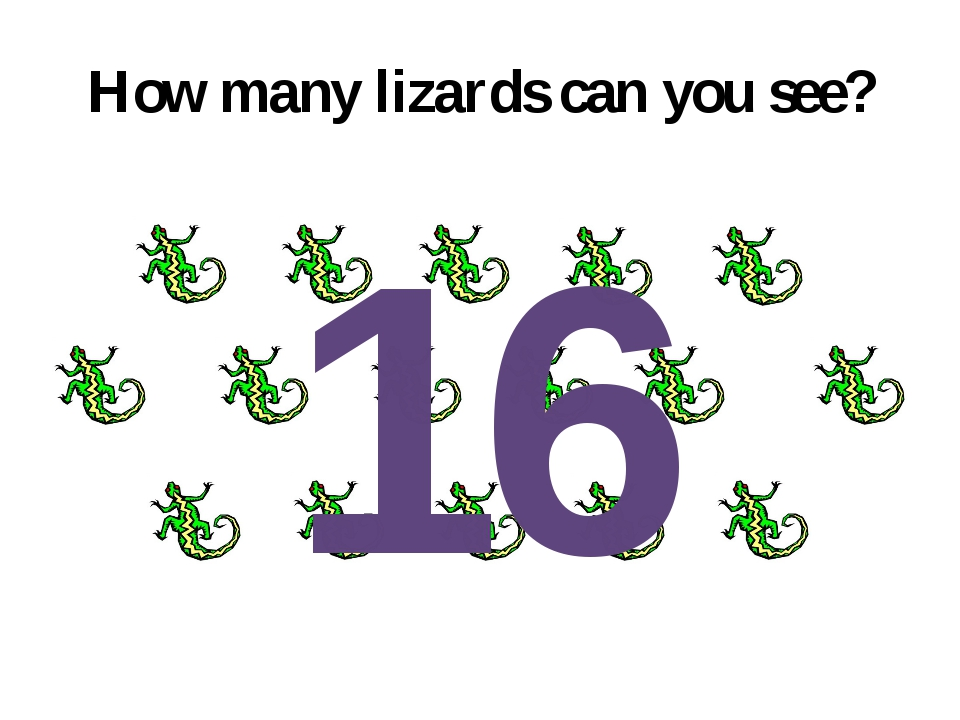 How many lizards can you see? 16