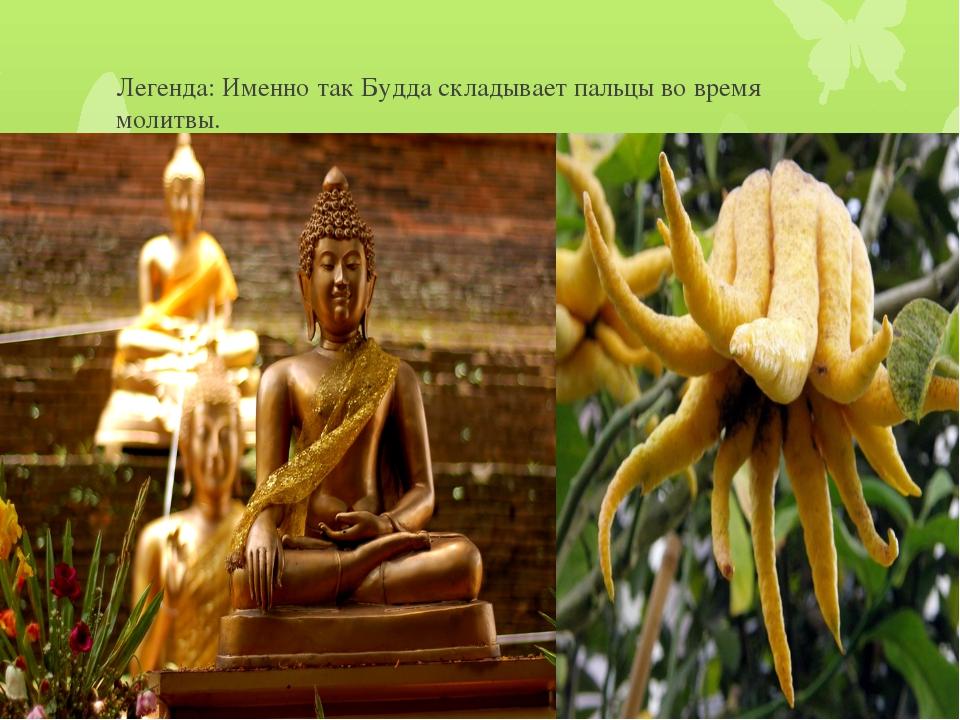 Легенда: Именно так Будда складывает пальцы во время молитвы.