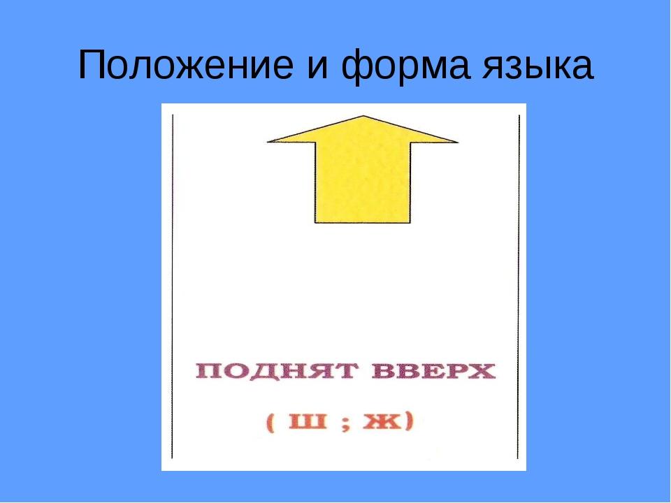 Положение и форма языка