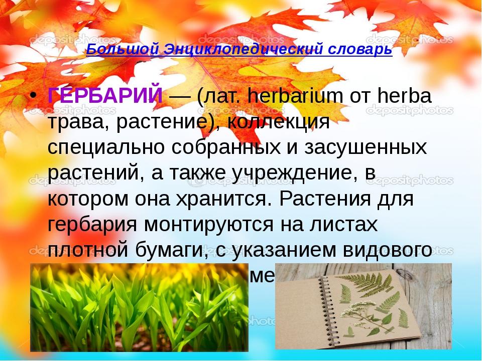 Большой Энциклопедический словарь ГЕРБАРИЙ— (лат. herbarium от herba трава,...