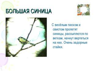 БОЛЬШАЯ СИНИЦА С весёлым писком и свистом пролетят синицы, рассыплются по вет